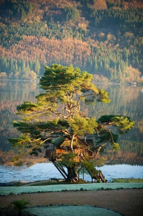 Beautiful-Tree-House-Lodge-Scotland