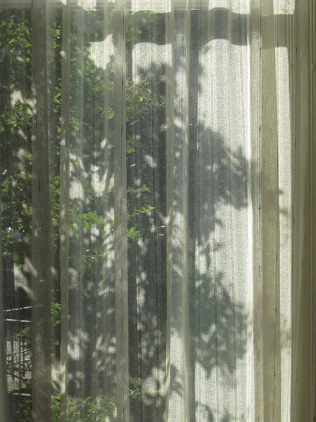 shadow of a bush in the window