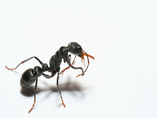 Ants Wallpapers