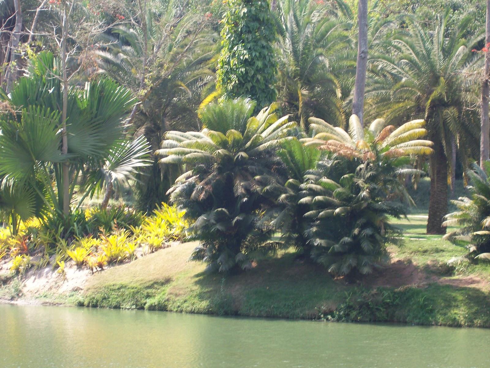 plantas do jardim botanico:Inhotim , ( Jardim Botânico ), que fica no município de Brumadinho