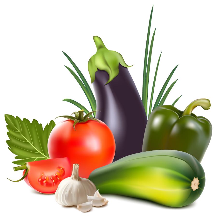 リアルな新鮮野菜のクリップアート nature realistic vegetables vector イラスト素材12