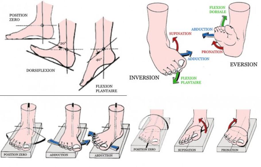 douleur haut du pied cheville