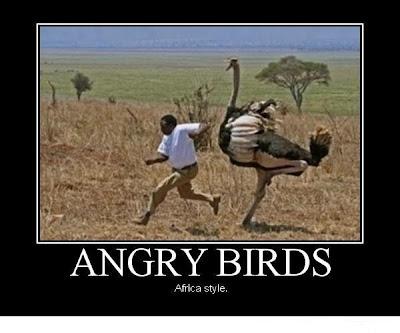 الطيور الغاضبة , angry birds , Africa style , angry birds Africa style , birds , angry bird