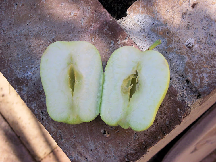 Apple Mystery