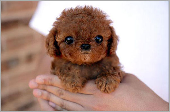 Cute Baby Dogs, Puppy, Dogs, Baby Animals