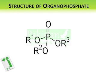 Structure of Organophosphates