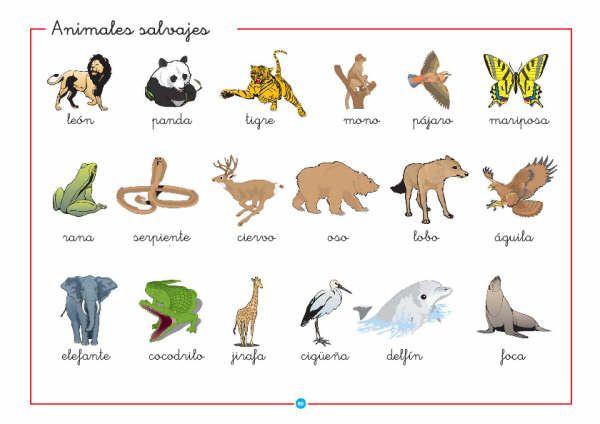10 animales salvajes en inglés y español - Imagui
