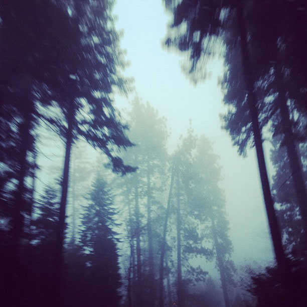 fog through the trees