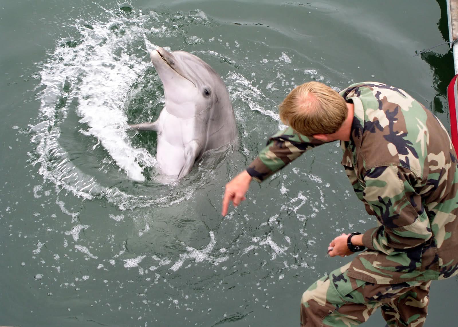 ikan lumba lumba, lumba lumba, gambar lumba lumba, ikan, lumba-lumba