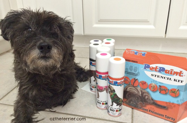 PetPaint is veterinarian-approved, safe colored hairspray for dogs