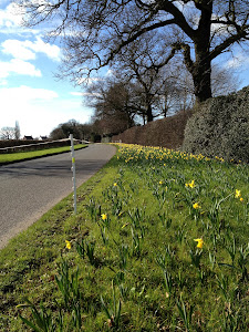 Spring has come early to Cheshire
