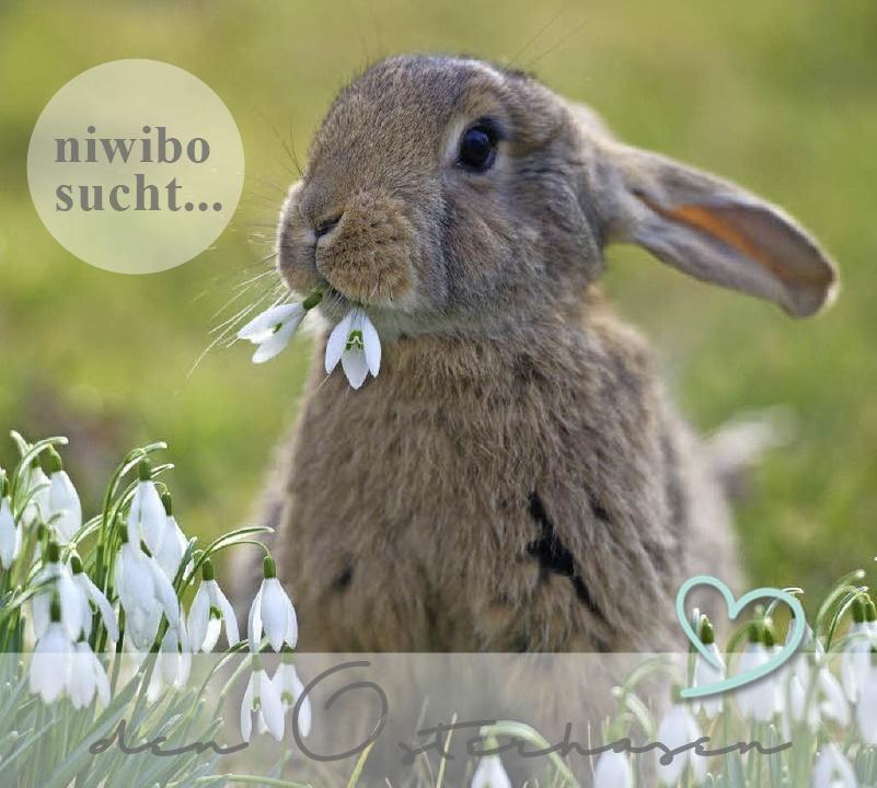 niwibo sucht... in März