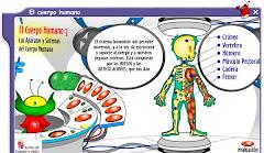 El cuerpo humano I
