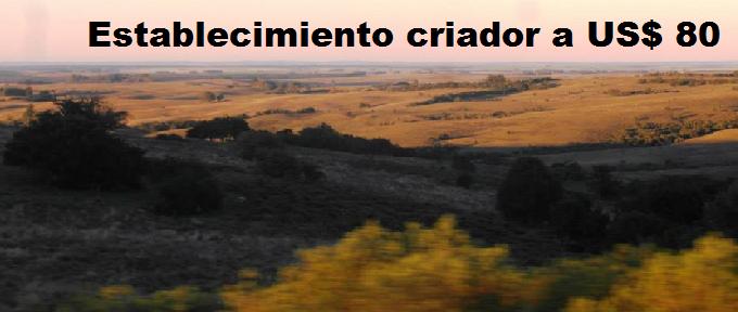 Renta ganadera en Cerro Largo