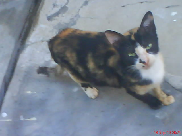 Cerita Kucing All About Cats