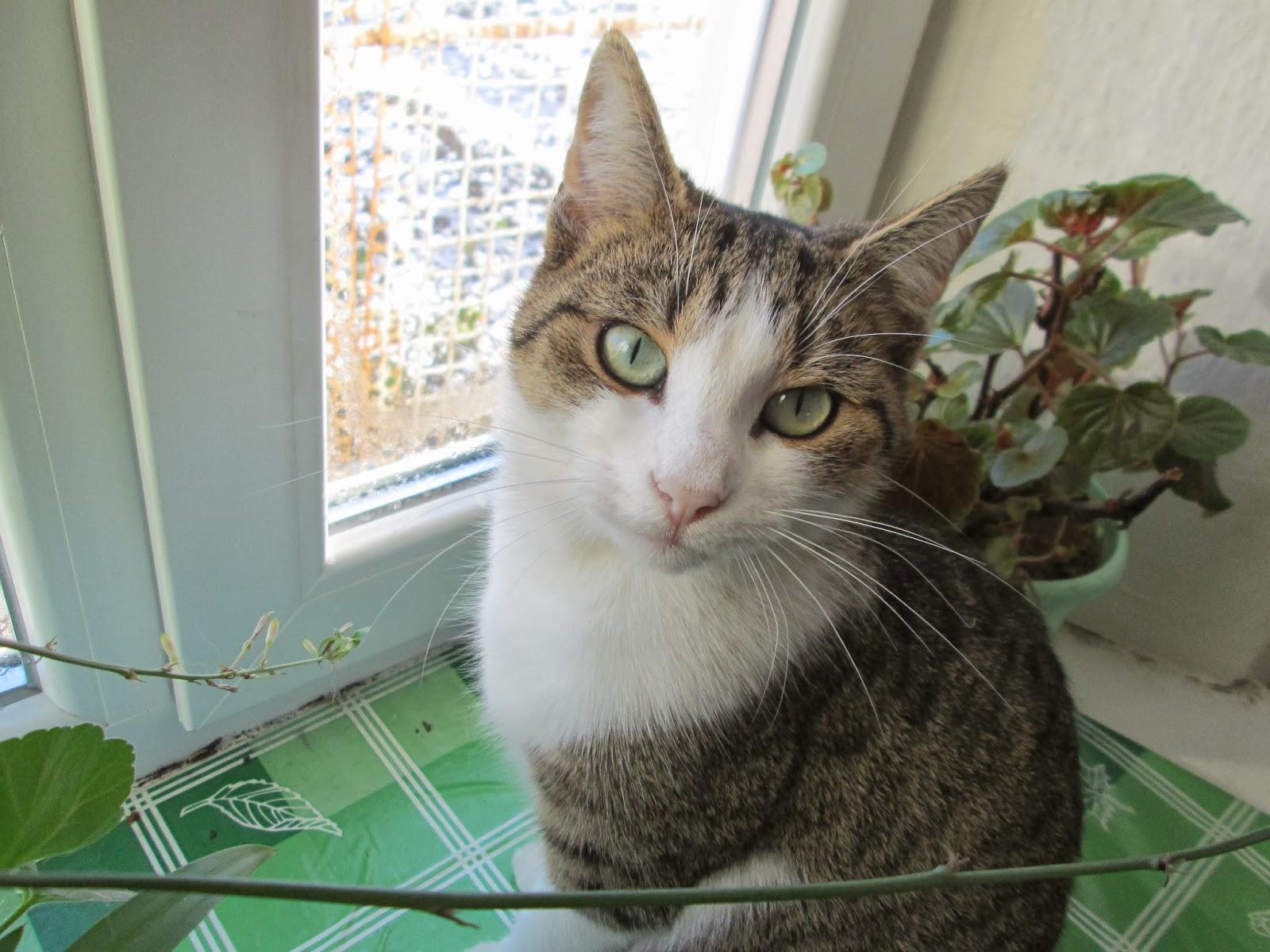 Кошка сидящая на подоконнике