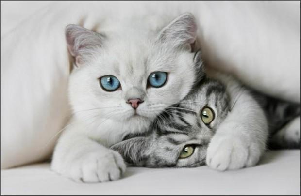 Забавные котята картинки
