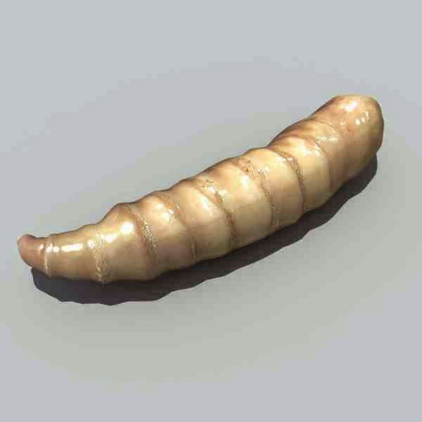 Maggot Treatment