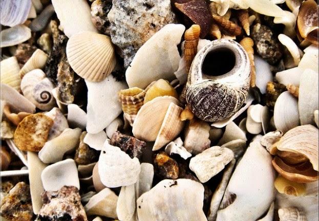#Shellshock, la grave vulnerabilidad en Bash -y todo lo que debes saber