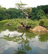ECOPARQUE LAGO DE LAS GARZAS, un lugar para relajarte y compartir con la naturaleza