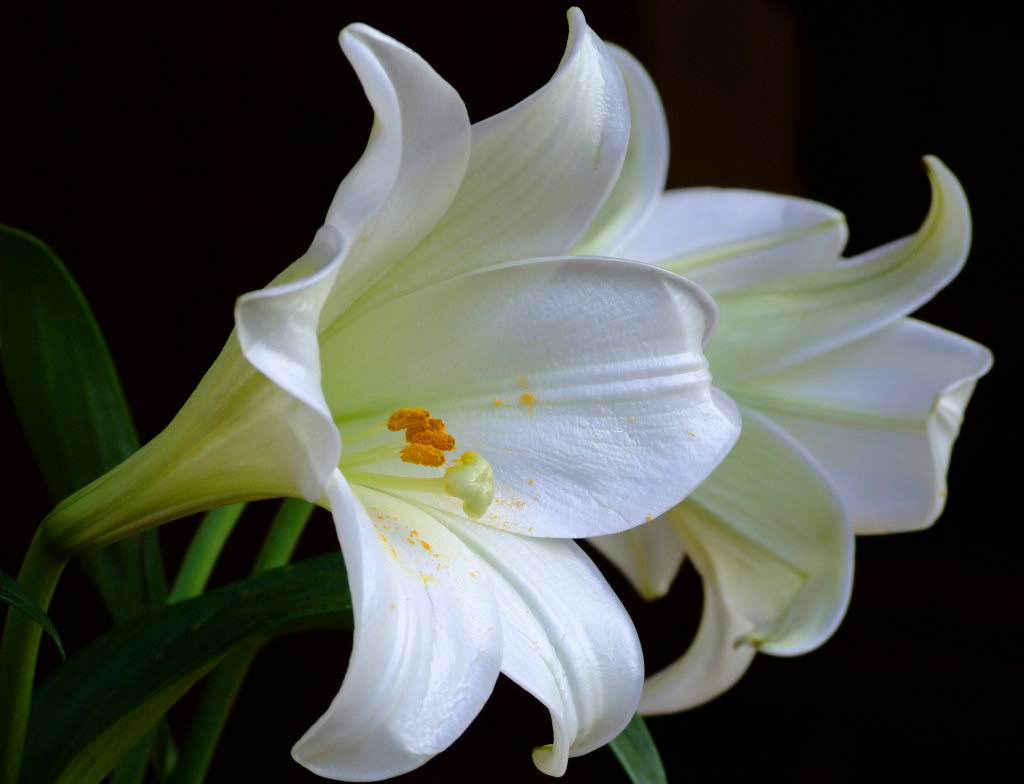Exclusively Cats Veterinary Hospital Blog Killer Lilies Are A No No