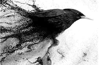 Illustration for 'A Murmuration'