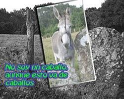 Blog ...de caballos y otras cosas