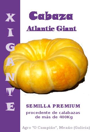 Semillas calabaza gigante Atlantic Giant, enredandonogaraxe.com
