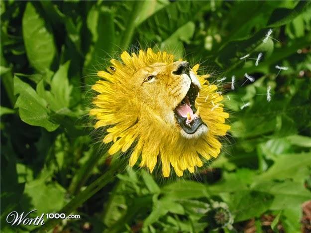 Perbedaan Sel Hewan dan Sel Tumbuhan | Ilmu Pengetahuan