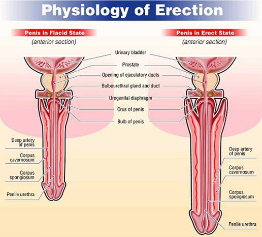 Rebuked Longer Lasting How To A Erection Get they are extreme