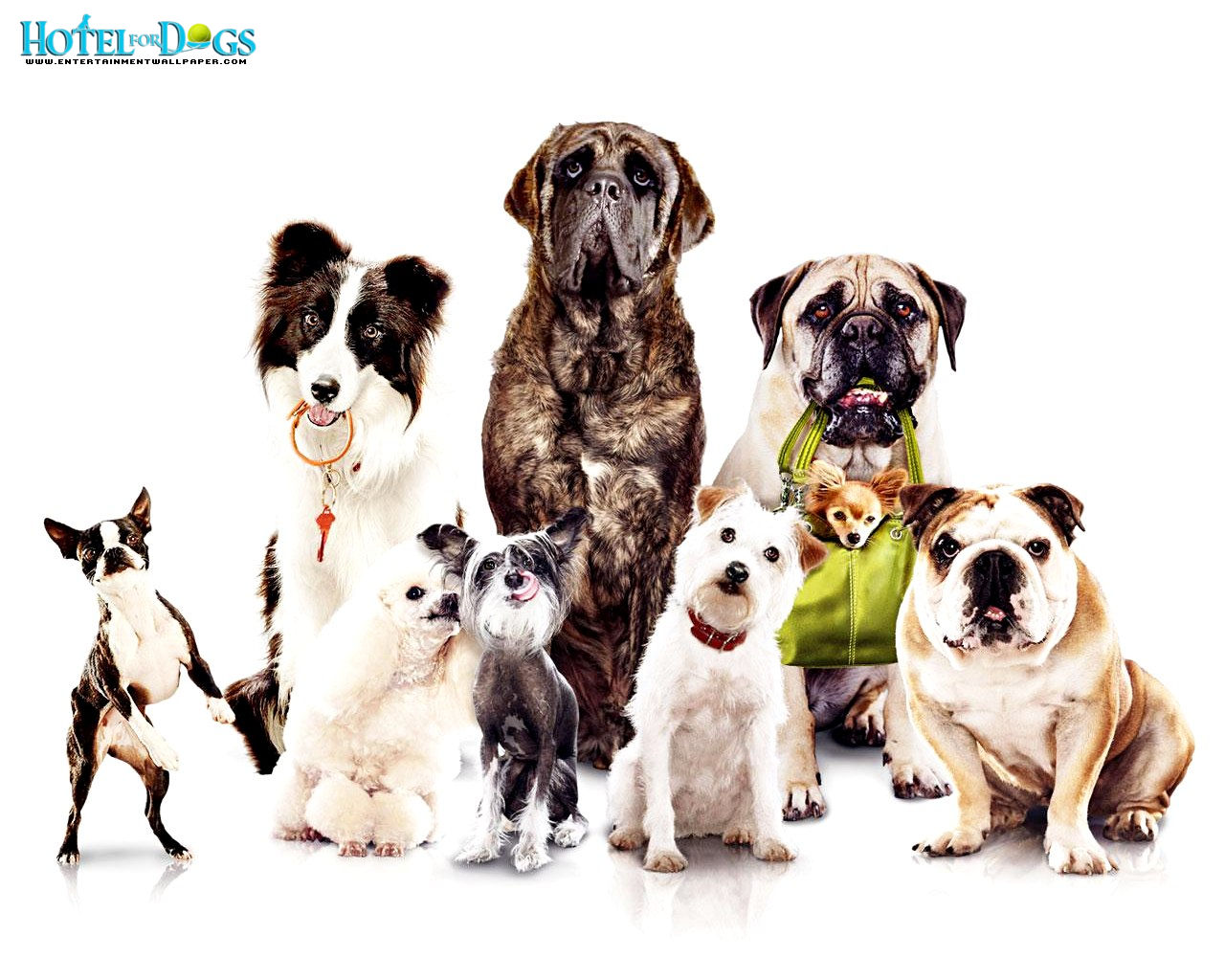 Dogs Wallpaper Dog Wallpaper Amazing Wallpapers