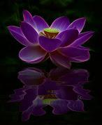 Nel Buddismo, i fiori di loto costituiscono un'offerta particolarmente sacra .