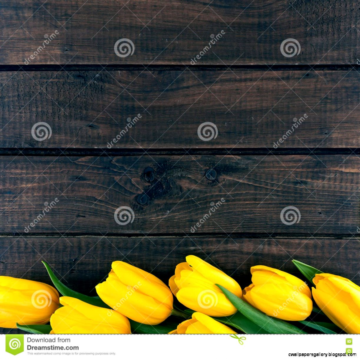 Row Of Yellow Tulips On Dark Rustic Wooden Background Spring Fl
