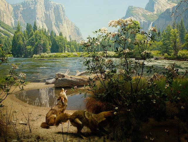 diorama, lobos, museo americano historia natural, foto, Lucas Uberti-bona