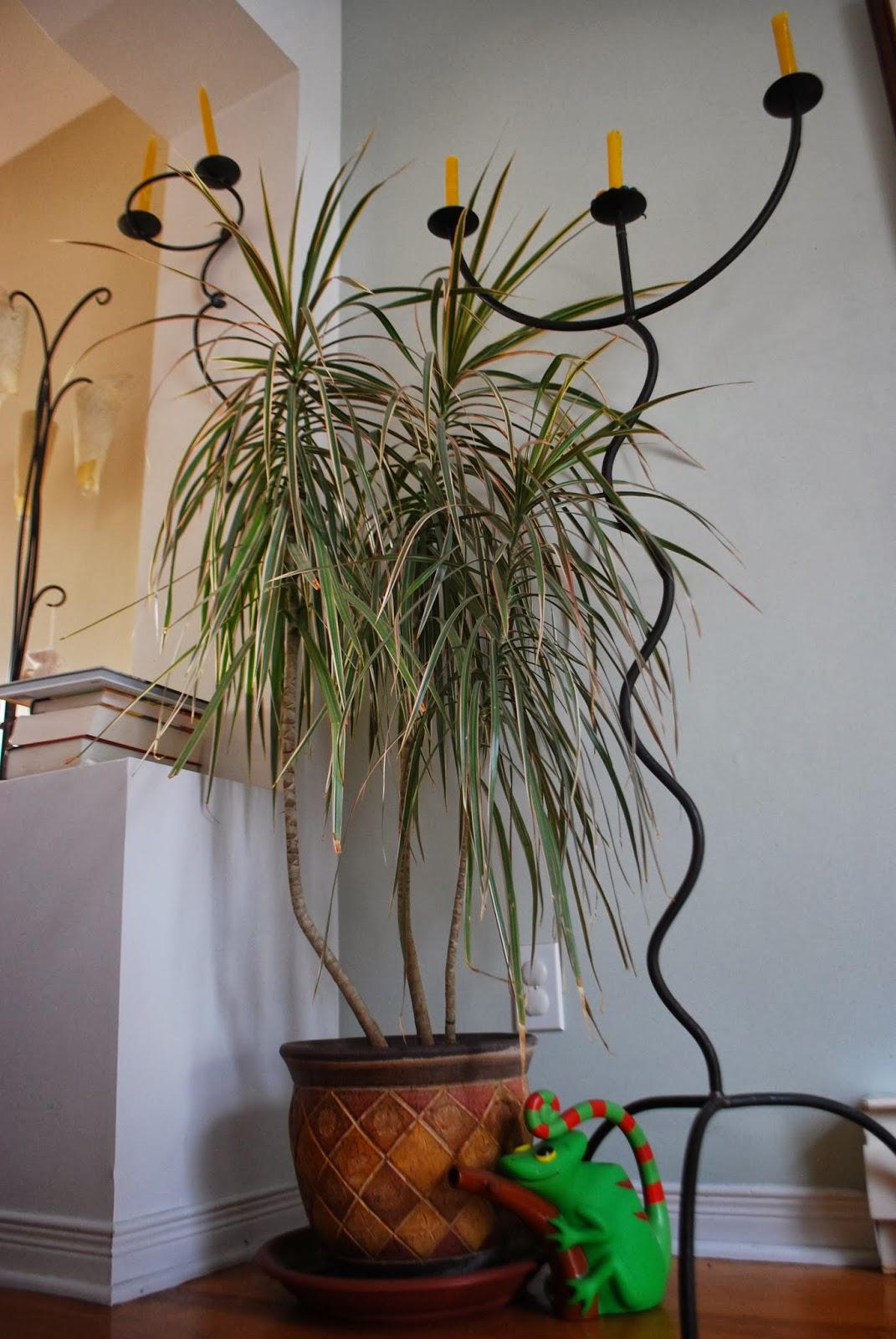 3 jardins au qu bec janvier 2015. Black Bedroom Furniture Sets. Home Design Ideas