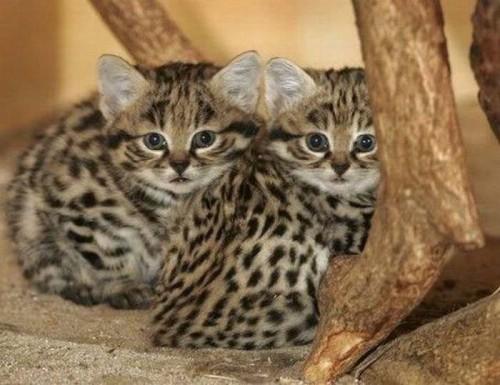 Imagenes felinos bebés - Imagui