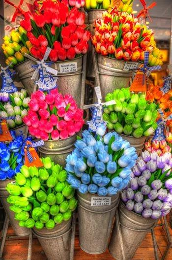Amo i tulipani