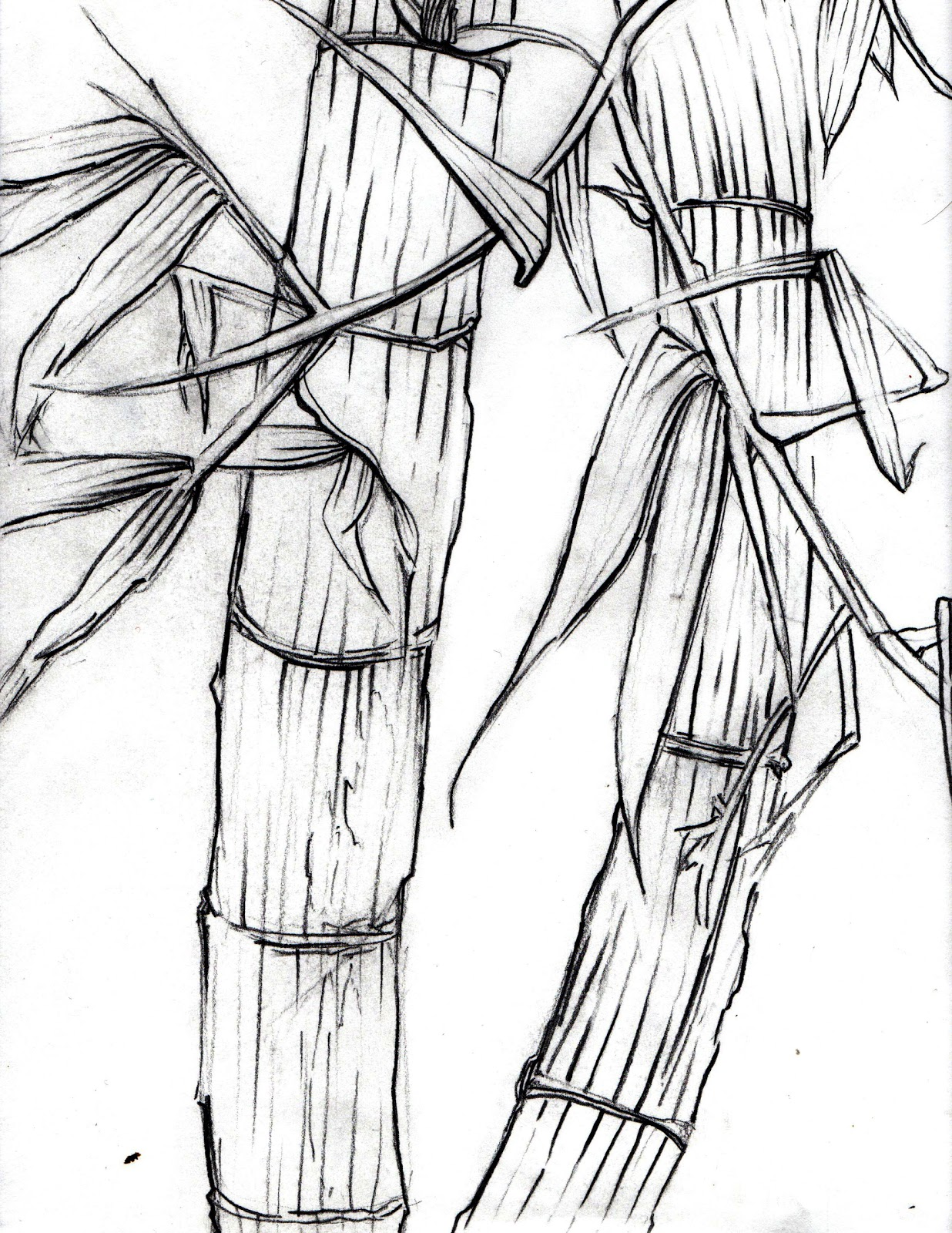 Chinese Zen Drawings Bamboo Drawing
