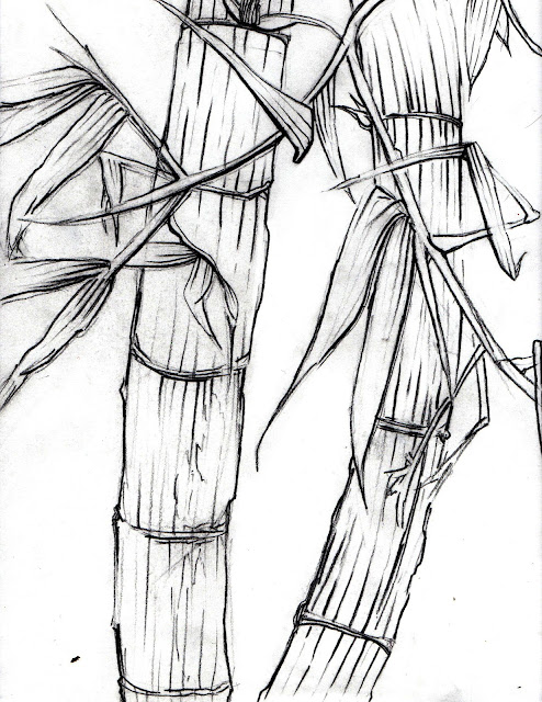Bamboo Drawing6