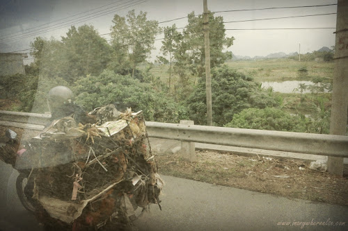 Transporting chickens in Vietnam
