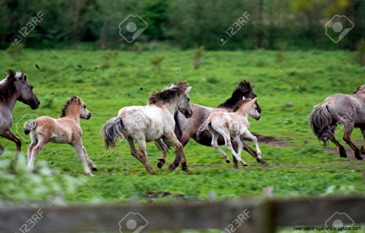 Running Wild Horses In Spring Stock Photo Picture And Royalty