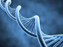DNA genes image img