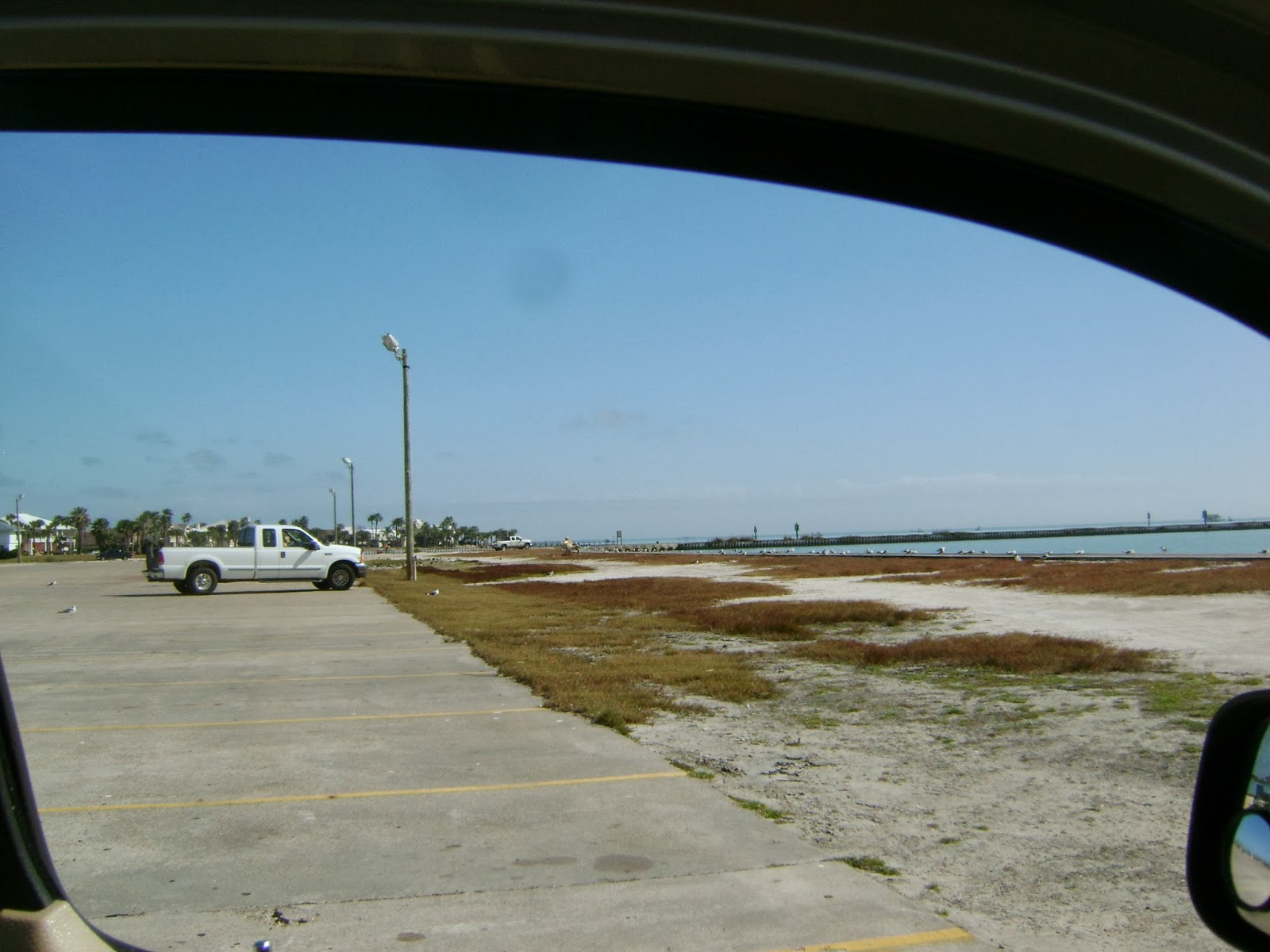 Driving ms daisy port aransas fishing for Port aransas fish cam