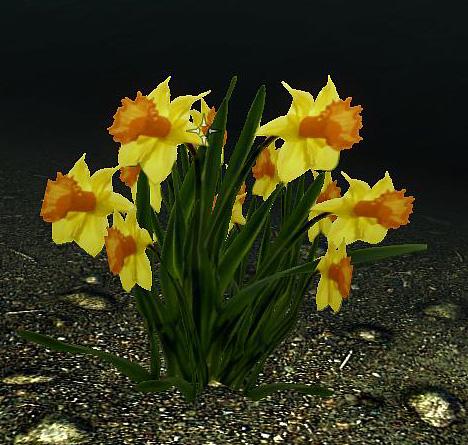 Hoddminir mod development time for spring daffodil yellowwhite narcissus pseudonarcissus mightylinksfo Images