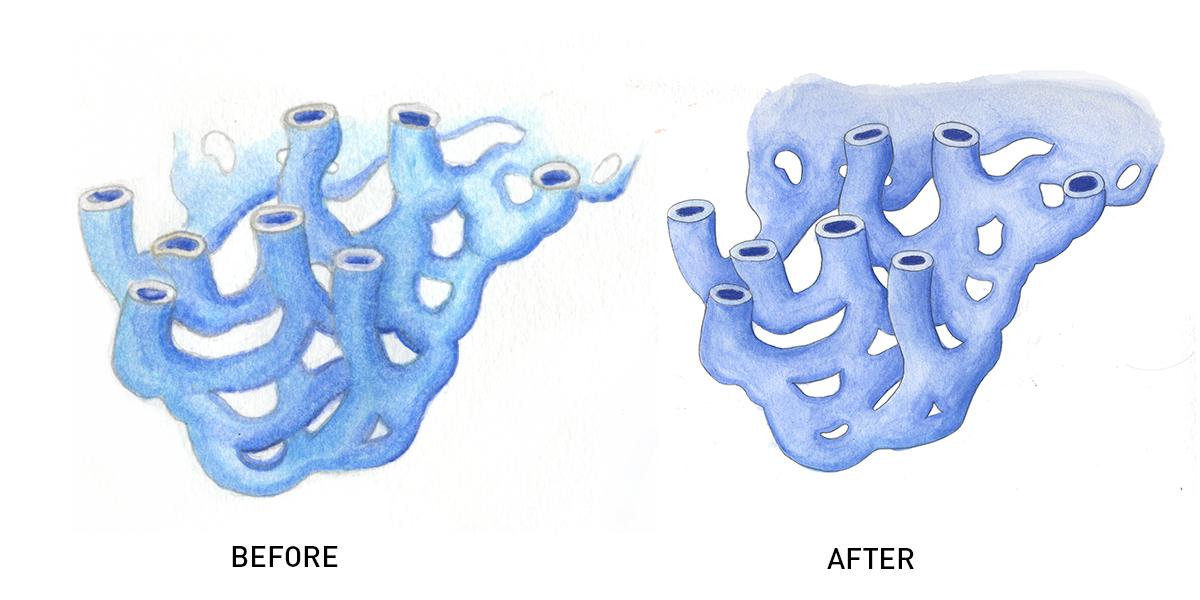 smooth endoplasmic reticulum synthesises