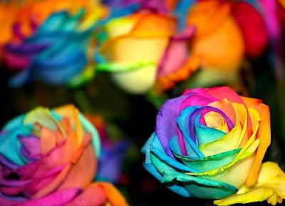 Rainbow Rose, Bunga Tercantik Di Dunia [ www.BlogApaAja.com ]