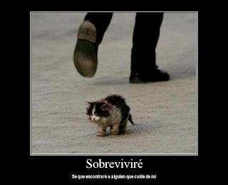 imagenes de gatos tristes
