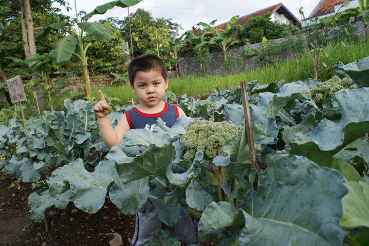 Sebuah blog yang berisi informasi sekitar pertanian dan produk dari