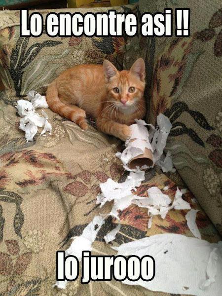 Bienvenidos al nuevo foro de apoyo a Noe #356 / 12.07.17 ~ 26.07.17 - Página 5 Imagenes+divertidas+de+gatos