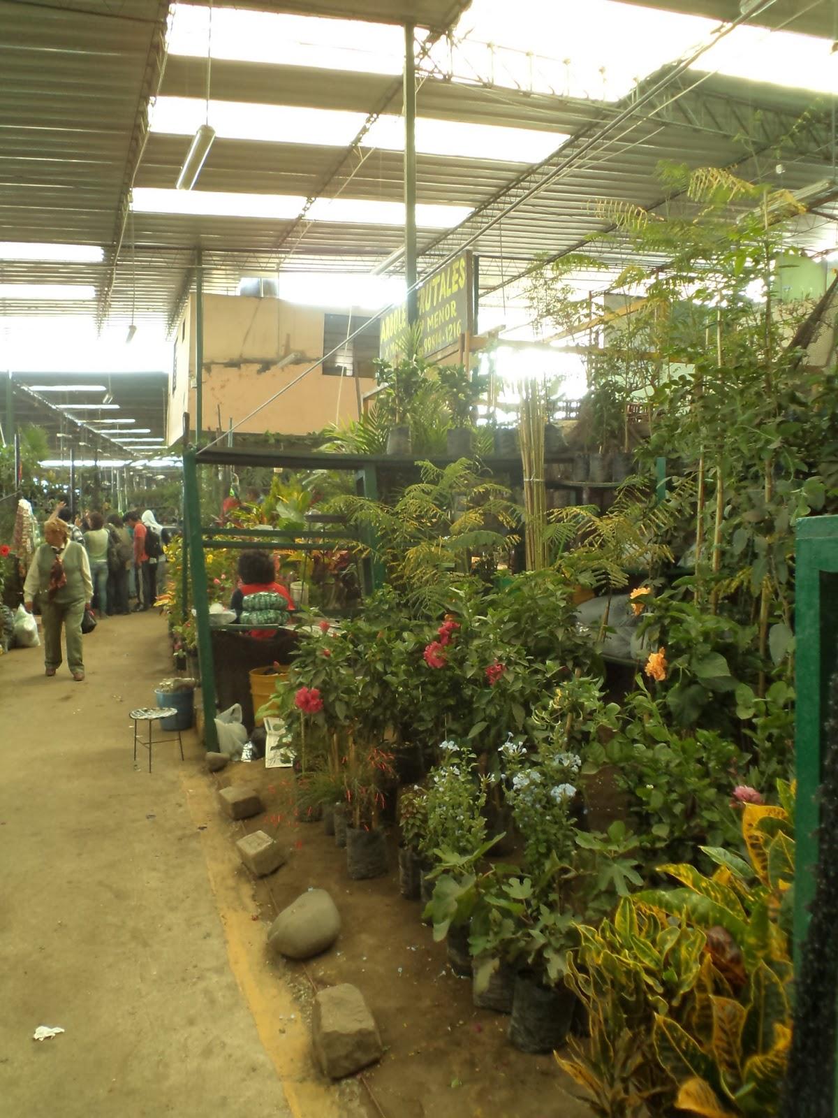 Alternativa ecol gica donde puedo comprar plantas for Viveros en lima